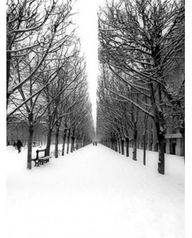 CUADRO FOTOGRAFIA DE PARIS JARDIN TUILERIES NEVADO Home