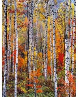 Bosque rojo en otoño - Cuadro vertical - paisaje con arboles 1 Home