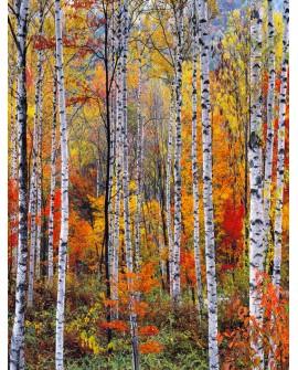 Bosque rojo en otoño - Cuadro vertical - paisaje con arboles 1