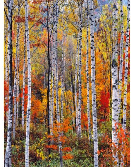 Bosque rojo en otoño - Cuadro vertical - paisaje con arboles 1 Home