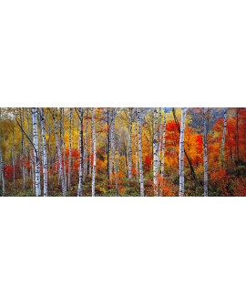 panoramico alpes franceses arboles bosque rojo mural gigante