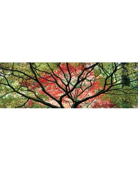 arbol oriental japones colorido mural gigante panoramico Cuadros Horizontales