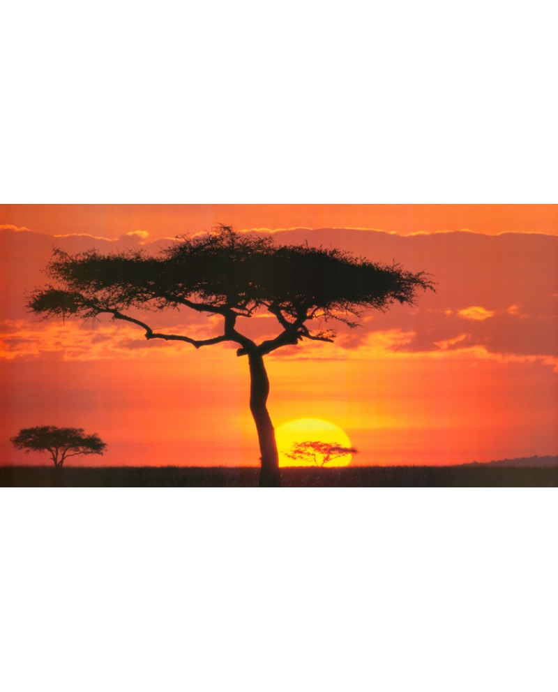 paisaje africano arbol en kenia sabana al atardecer panoramico pais...