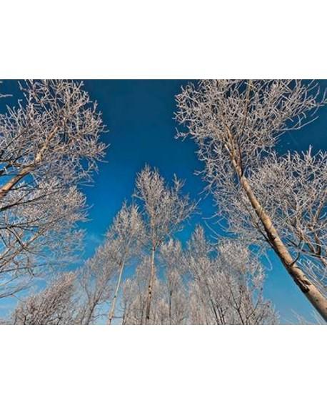 fulvio ferrua paisaje arboles y cielo invierno cuadro mural Home