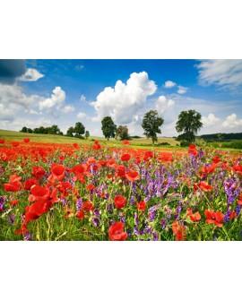 frank krahmer paisaje europeo campo con amapolas cuadro Home