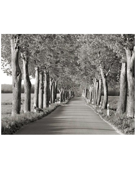 frank krahmer paisaje camino arbolado blanco y negro cuadro Home