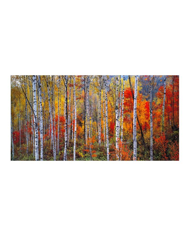 Paisaje panoramico largo de bosque rojo cuadro mural for Cuadros verticales grandes