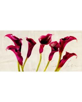 teo rizzardi cuadro flores calas bonitas panoramico Cuadros Horizontales